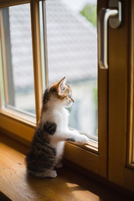 工場の窓より-葉山嘉樹-狐人的読書感想-イメージ