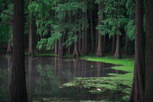 幻影の盾-夏目漱石-狐人的あらすじ-イメージ